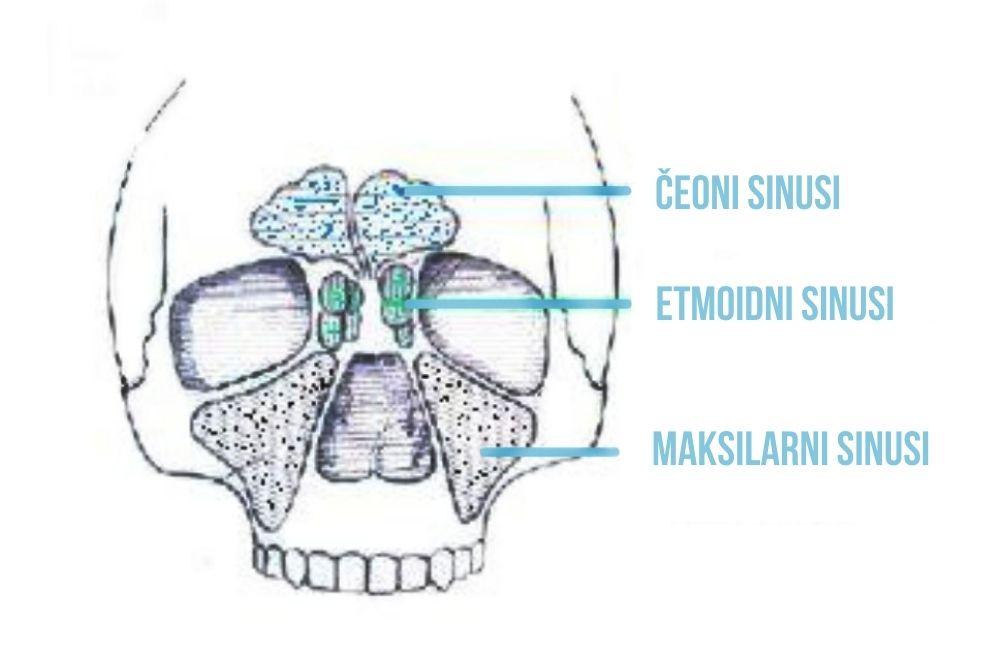 maksilarni sinus beograd centar 2
